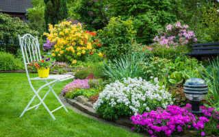 Радуем глаз: на что важно обратить внимание при выборе цветов на дачу