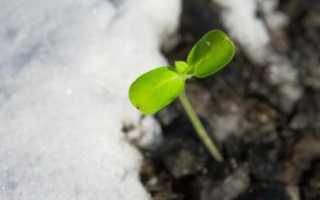 Что посадить для раннего урожая