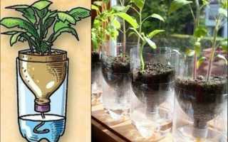 Как поливать рассаду фитильным способом