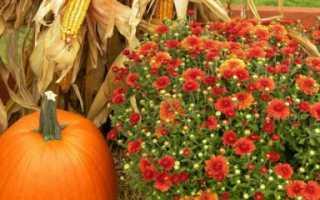 Лунный календарь садовода на октябрь 2018 года