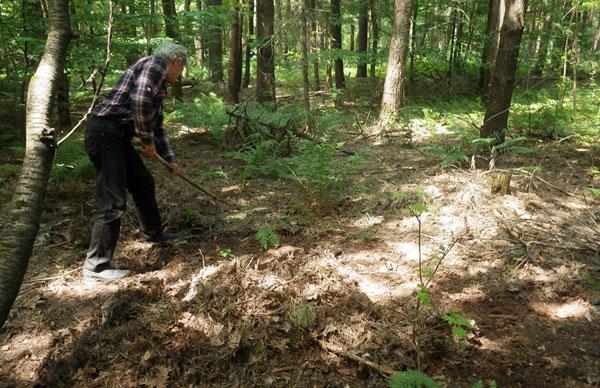 Заготовка земли для рассады