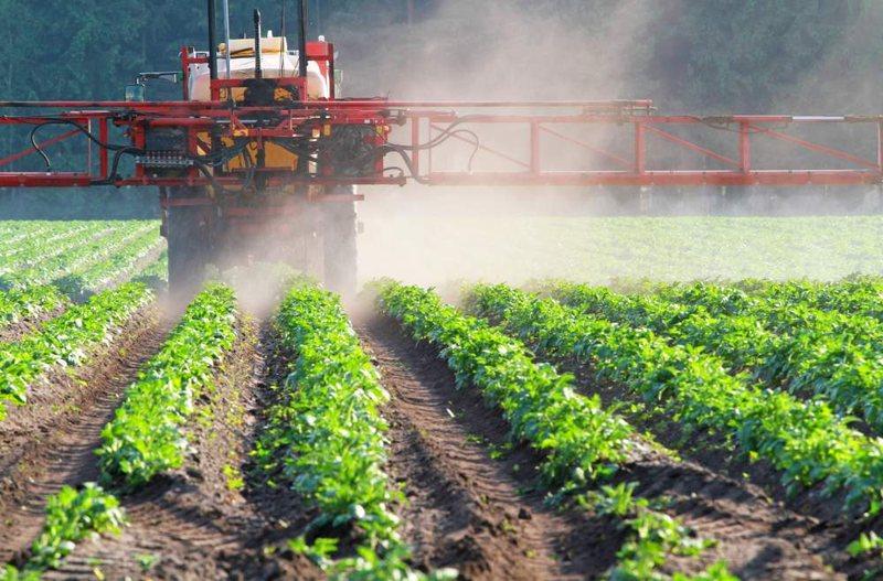 В сельском хозяйстве используют гербициды селективного действия