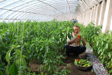 растения в вегетарии