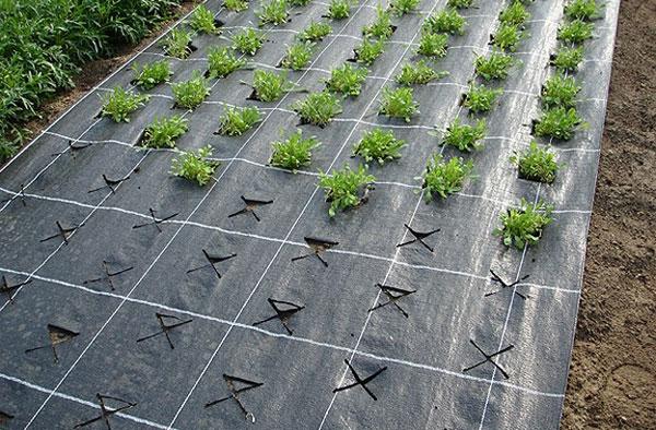 Агроспан на огороде