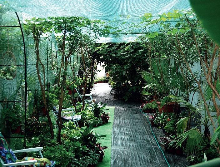 Тропические растения в теплице-термосе