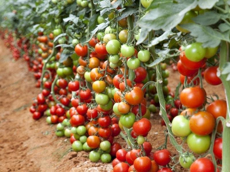 Плодородный грунт - основа урожайности