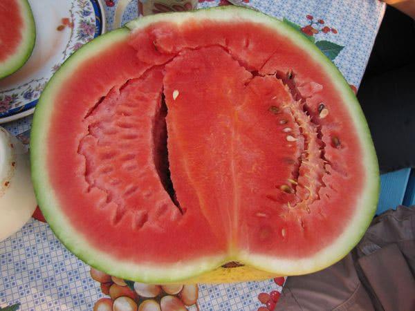 Сорт арбуза огонек