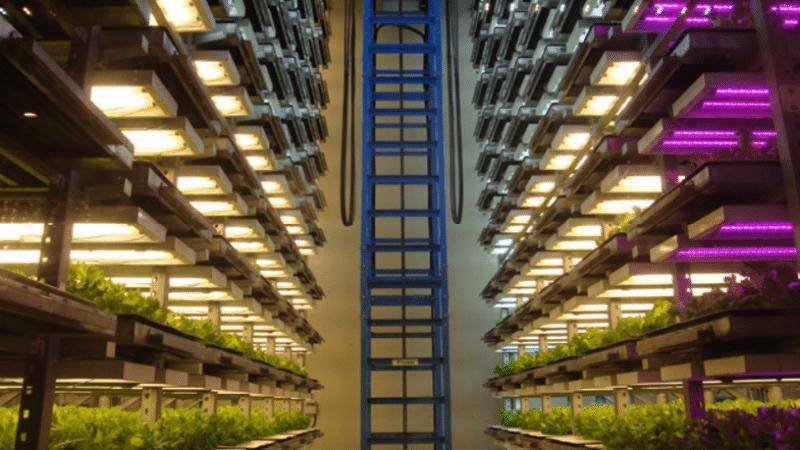 Сбалансированное освещение на основе LED-ламп и НЛВД