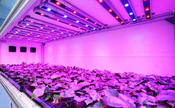 LED подсветка растений