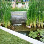 Аир болотный – украшение водоема