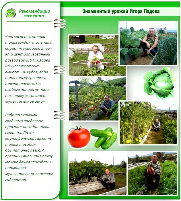Урожай с грядок Лядова