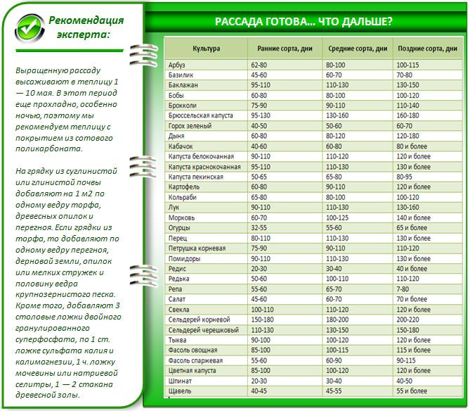 Сроки получения урожая овощей