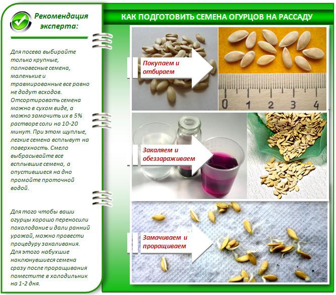 Как подготовить семена огурцов для теплицы