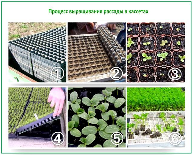 Процесс выращивания в кассетах