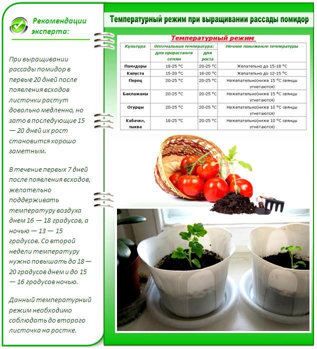 Как сажать рассаду томатов