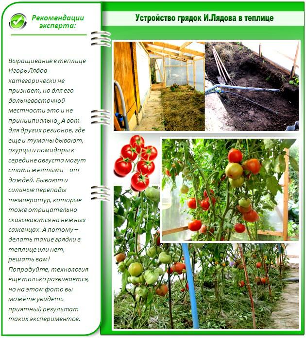 Технология Игоря Лядова в теплице