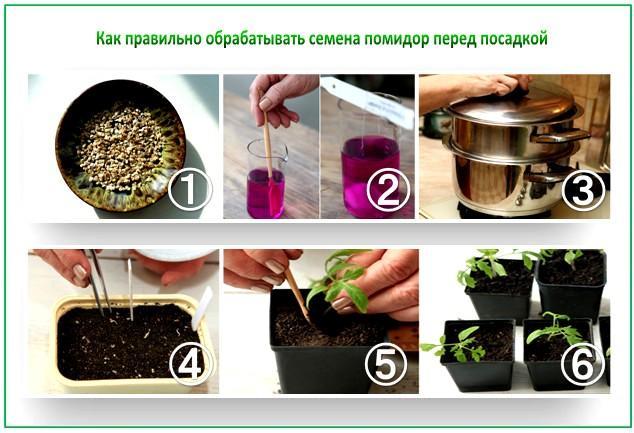Сеем семена на рассаду помидор