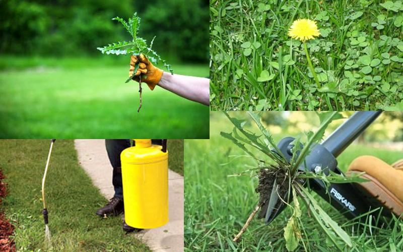 Борьба с сорняками гербицидами ведется почти круглый год (кроме зимы)