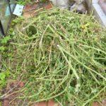 Ботву, сорняк и прочие зеленые остатки из теплицы нужно вынести