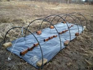 На фото: для прогрева почвы в мини парнике сначала расстелили черную пленку, затем последует укрытие дуг