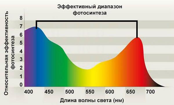 Диапазон фотосинтеза растений