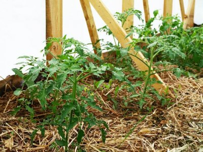 Данное биотопливо в парнике представлено в идее отходов сельского хозяйства, гнилого сена, ботвы сельскохозяйственных растений.