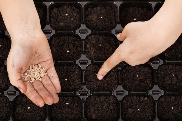 Расстояние между семенами