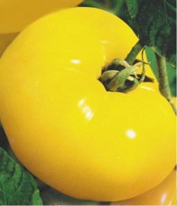"""Действительно большой и желтый """"Желтый гигант"""""""