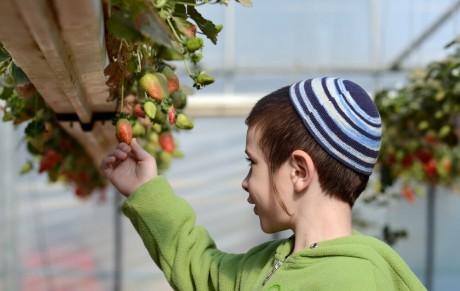 израильская теплица