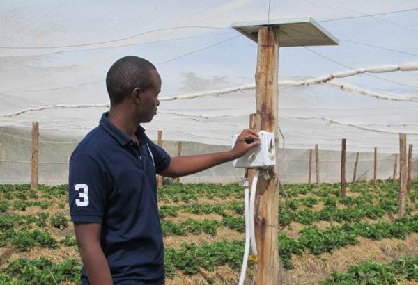 Мониторинг развития растений с помощью промышленного терморегулятора