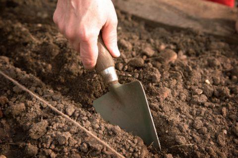 Грядки для подзимнего и ранневесеннего посева лучше готовить заранее