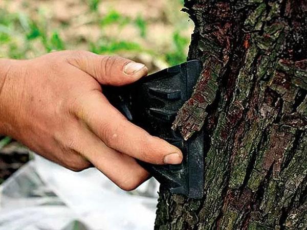 Очистка дерева от старой коры