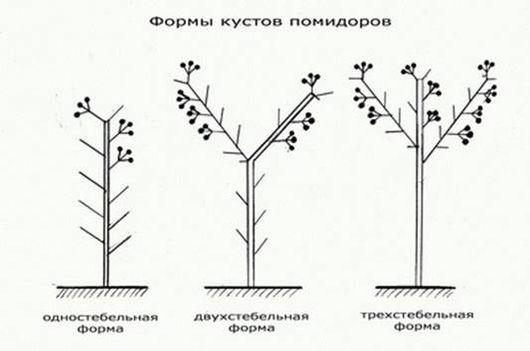 Формы кустов томатов