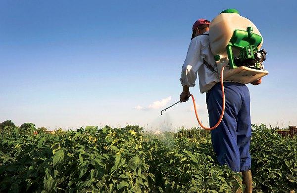 Используя гербициды на томаты и картофель, каждый должен надевать защитный костюм.