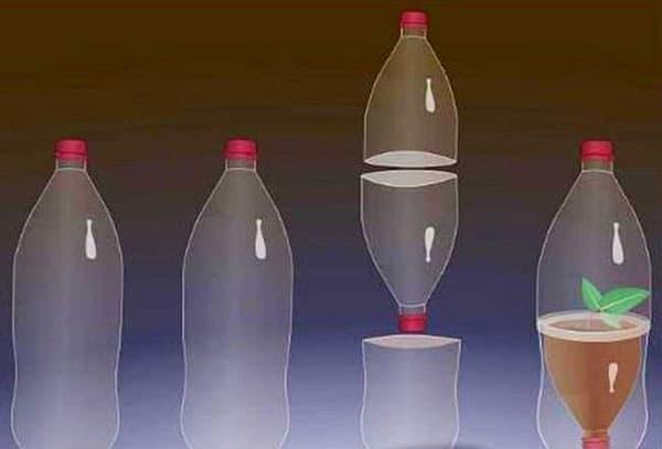 Мини парник из пластиковой бутылки