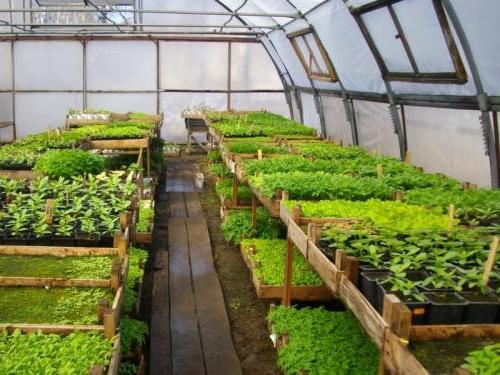 Какие можно использовать конструкции для выращивания салата