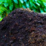 Компост одновременно удобряет и защищает почву