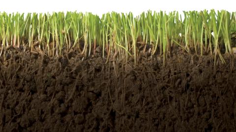 Корни сидератов разрыхляют землю
