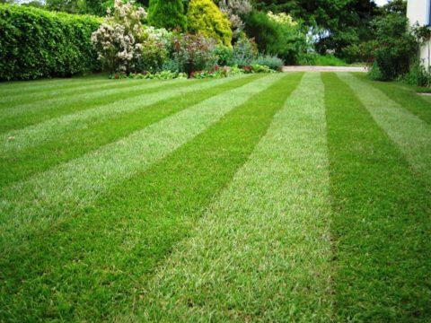 Красивый двухцветный газон