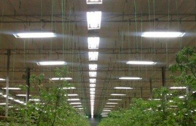 Лампы можно подвешивать на тросах и регулировать по высоте