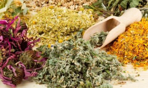 Лекарственные травы могут заменить многие аптечные средства
