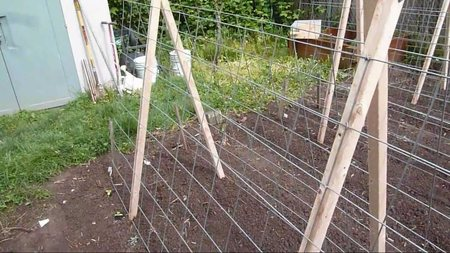 Выращивание на шпалерах