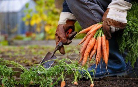 Можно помогать себе и небольшой садовой лопаткой