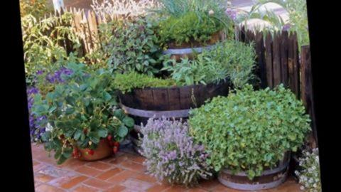 Однолетники можно выращивать в горшках и подвесных кашпо
