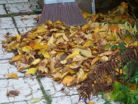 Опавшими листьями перекопанные грядки можно замульчировать ещё осенью