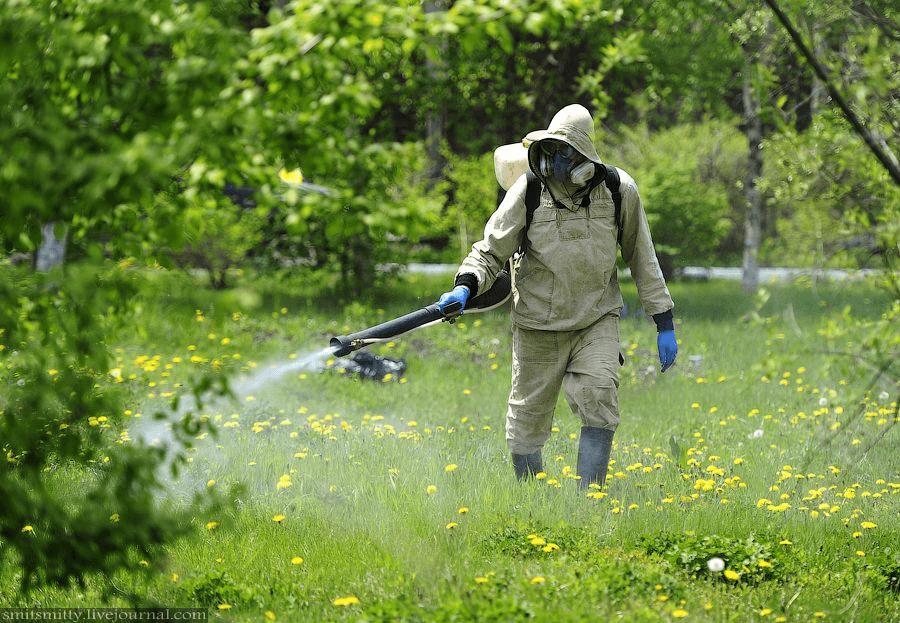 Опрыскивание растительности на участке