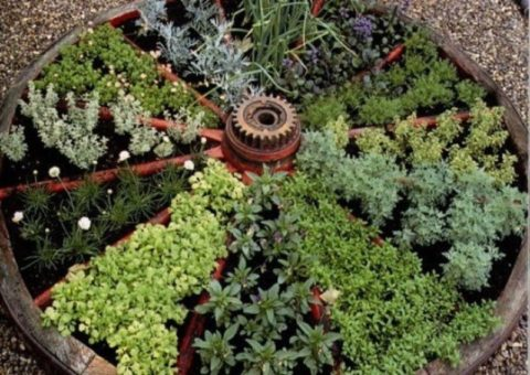Оригинальное решение для выращивания лекарственных трав