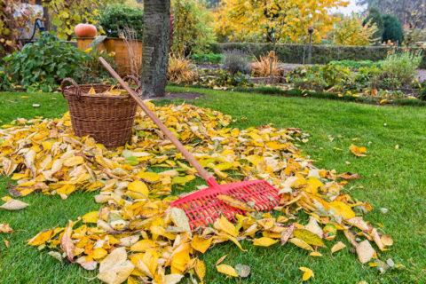 Оставлять на газоне опавшую листву нельзя