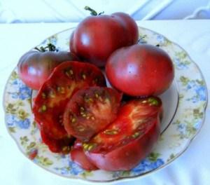 парниковые сорта помидор