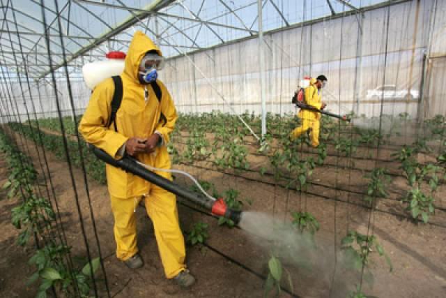 Пестициды их назначение и использование